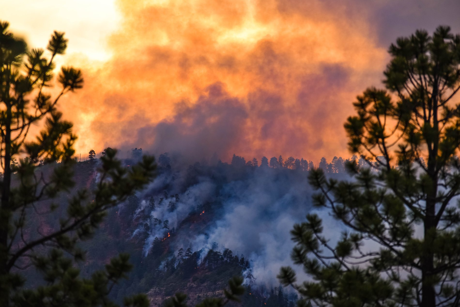 quema de bosque